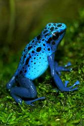 Living Amphibians