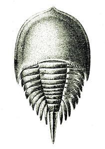 Xiphosura