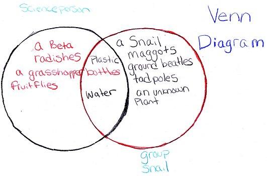 Star Life Cycle Of A Venn Diagram Find Wiring Diagram