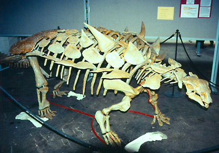 Skeleton of Gastonia