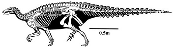 Skeletal reconstruction of Scelidosaurus harrisoni