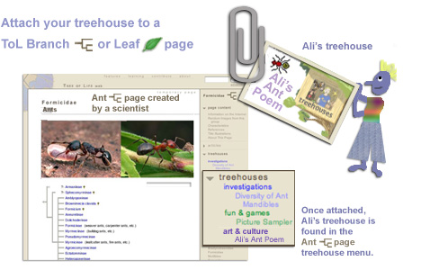 attaching your work to a branch of leaf page on the Tree of Life
